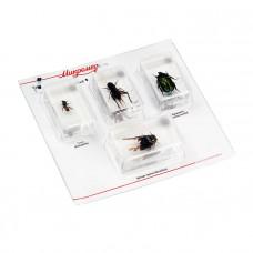 Набор насекомых в акриле Микромед №2