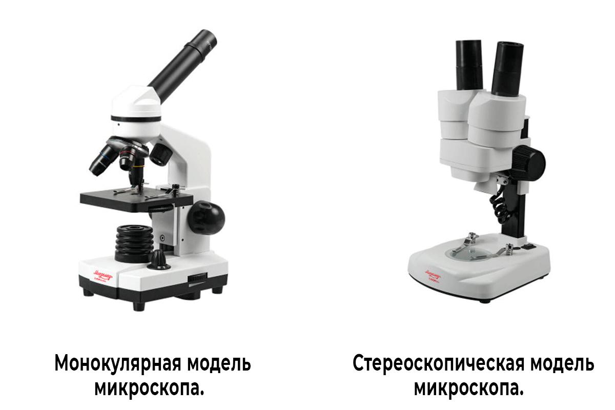 model-microskopa.png